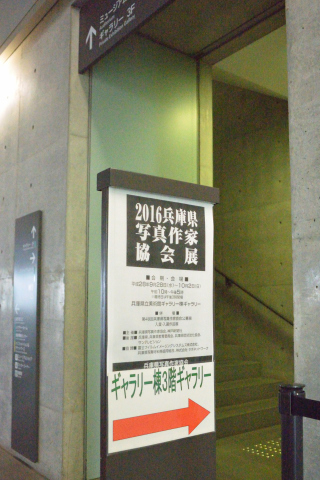 DSC_4081-320.jpg