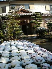玄関前の雪.JPG